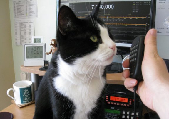 Leighton, the first (and much missed) Essex Ham Shack Cat