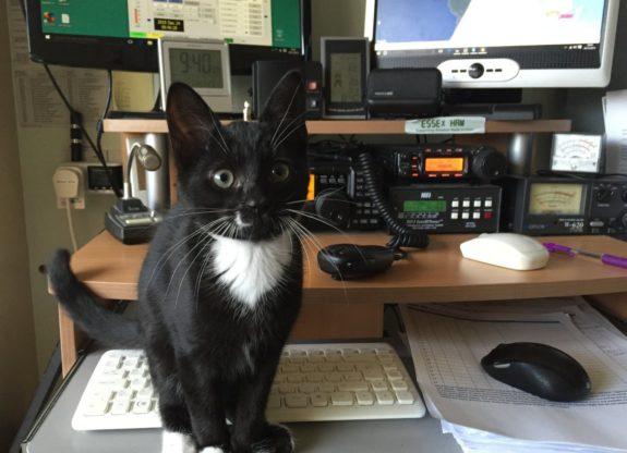 Splodge, the Essex Ham Shack Kitten, aged 3 months